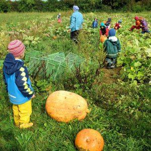 Kinder spielen im Kürbisfeld